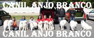 SAMOIEDA ANJO BRANCO