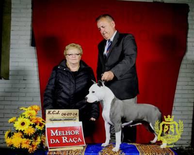 Criação da raça American Staffordshire Terrier