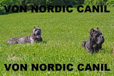 CANE CORSO VON NORDIC