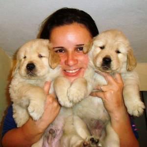 Golden Retriever - Filhotes Machos e Fêmeas