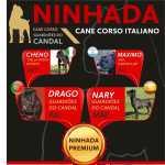 Cane Corso Cane Corso Italiano Porto Gaia