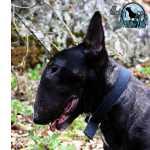 Bull Terrier MACHO BULL TERRIER NEGRO PARA VENDA Lisboa Lisboa