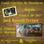 Jack Russel Terrier Ninhada - Jack Russell Terrier Lisboa Póvoa De Santa Iria