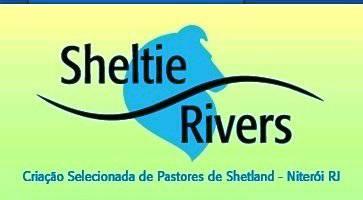 Canil Sheltie Rivers criando pastor de Shetland  com amor e carinho