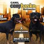 Rottweiler CENYBASKO CANIL