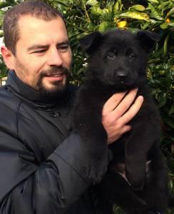 VON HAUS MORES Cachorros Pastor Alemão
